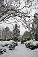 Сирецький дендрологічний парк, Київ.jpg