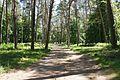 Сосновий парк Лохвиця 1.jpg