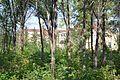 Школа за деревьями - panoramio.jpg