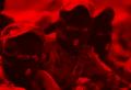 المجاميع المسلحة في العراق.png