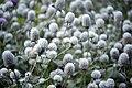عکس از گلها و گیاهان باغ بوتانیکال تفلیس - گرجستان 09.jpg
