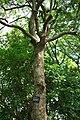 東高根森林公園 - panoramio (44).jpg