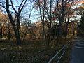 森の入り口 - panoramio (1).jpg