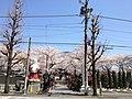 浄心寺 Joshin-ji (Mukogaoka, Bunkyo).jpg