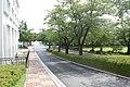 원광대학교 미술대 및 로스쿨 사이길 (Wonkwang UNIV) - panoramio.jpg