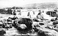 -IDAHO-B-0189- Snake River - Salmon Falls (34161977583).jpg