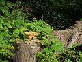 ... mushroom (5893874253).jpg