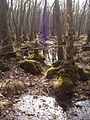 05-04-03-plagefenn-by-RalfR-12.jpg