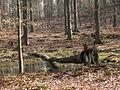 05-04-03-plagefenn-by-RalfR-34.jpg