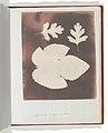 1. Foglia di Fico. 2. Foglia di Spina Bianco MET DP202242.jpg
