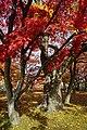 171103 Morioka Castle Morioka Iwate pref Japan04n.jpg