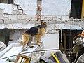2008년 중앙119구조단 중국 쓰촨성 대지진 국제 출동(四川省 大地震, 사천성 대지진) SSL26862.JPG