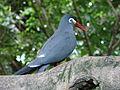 2008-05-25 Pittsburgh 073 Aviary (2668903173).jpg