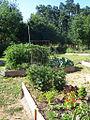 2009 community garden SacramentoCA 3553442812.jpg