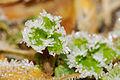 2012-01-14 14-15-56-givre.jpg