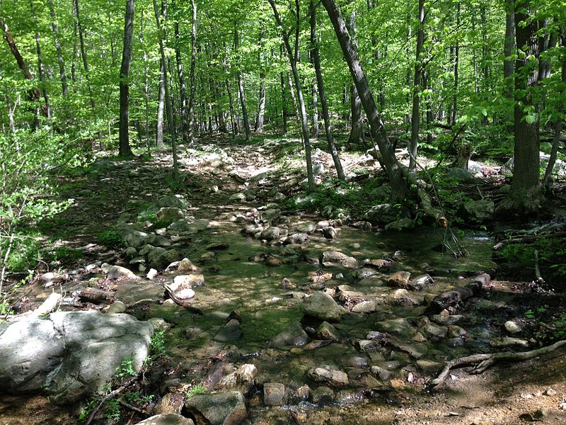 File:2013-05-12 10 19 37 View up the MacEvoy Trail where it crosses a small stream in Ramapo Mountain State Forest.jpg