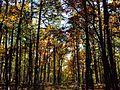 20131102 Flatside Wilderness 03.jpg