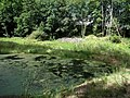 20140812025DR Röhrsdorf (Dohna) Röhrsdorfer Park Pfaffenteich.jpg