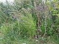 2015.09.05 11.55.18 DSC00283 - Flickr - andrey zharkikh.jpg