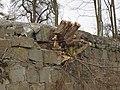 2018-02-13 (622) Overgrown wall at Bahnhof Mauthausen.jpg