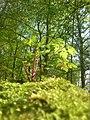 2018-04-17-NSG Schlosspark Benrath- Blick entlang der Wurzel eines Baumstumpfes auf eine kl Pflanze -rote Stengel.jpg