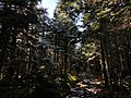 2020-10-17 14 18 38 View west along the Lookout Rock Trail on Equinox Mountain in Manchester, Bennington County, Vermont.jpg