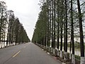 298县道八涌附近 - County Road 298 near Canal 8 - 2012.03 - panoramio.jpg