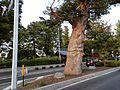 4 Marunouchi, Matsumoto-shi, Nagano-ken 390-0873, Japan - panoramio (18).jpg