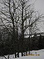 79868 Feldberg, Germany - panoramio (5).jpg