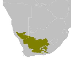 Karoo korhaan - Image: AT1314 map
