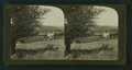 A Reminder of Spanish rule, quaint Santa Barbara Mission, California, from Robert N. Dennis collection of stereoscopic views.png