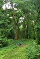 A bench in the Arboretum. Horki, Belarus.png