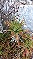 A cactus.jpg