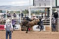 A cowpoke doesn't have much time left aboard this bucking bronco at a large outdoor rodeo that's a feature of the annual (in this case 75th anniversary) Jubilee Days festival in Laramie, Wyoming LCCN2015633118.tif