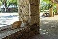 A feral cat in Cebu, Philippines, March, 2016.jpg