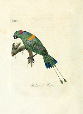 A general history of birds (Pl. XXIV) (8968816126).jpg