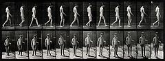 A man walking. Photogravure after Eadweard Muybridge, 1887. Wellcome V0048750.jpg