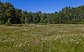 A meadow at Aylard farm, East Sooke Regional Park, British Columbia, Canada 011.jpg
