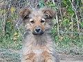A puppy 2.jpg