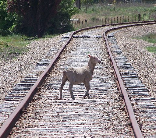 A sheep on a railway track