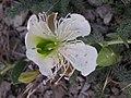 Ab plant 1358.jpg
