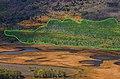 Aerial View of the Pando Tree.jpg
