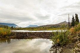 Afluente del río Nenana, McKinley Park, Alaska, Estados Unidos, 2017-08-31, DD 05.jpg