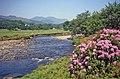 Afon Glaslyn - geograph.org.uk - 1466819.jpg