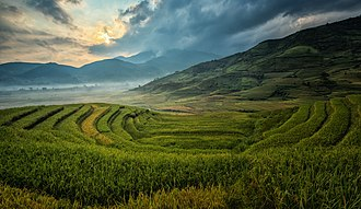 Human geography - This picture shows terraced rice agriculture in Asia.
