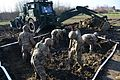 Airfield repair and Crater repair, 54th Brigade Engineer Battalion, 173rd Airborne Brigade 2017 170214-A-KP807-134.jpg