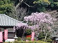 Aizome Hall of Hasedera Temple 長谷寺愛染堂 - panoramio.jpg