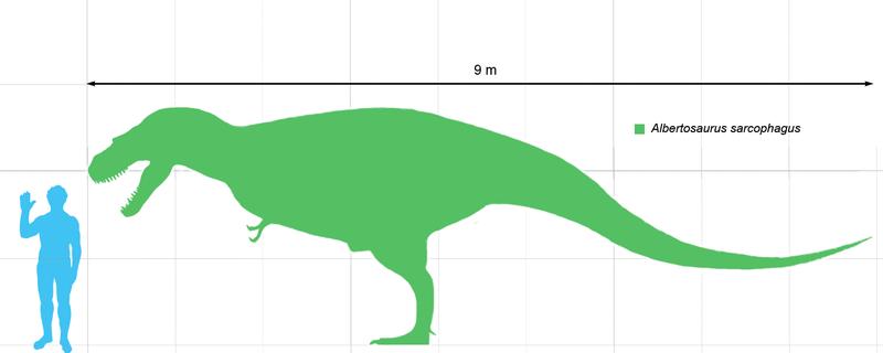 Fichier:Albertosaurus.png