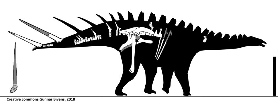Alcovasaurus longispinus Skeletal