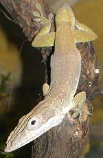 List Of Reptiles Of Guatemala Wikipedia